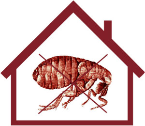 fleas in your house